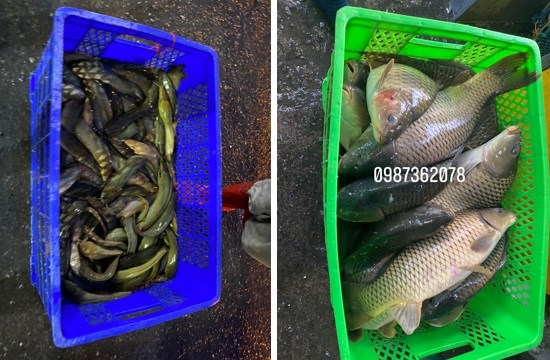 Cung cấp hải sản rẻ chợ yên sở